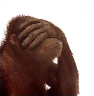 Monkeyincognito