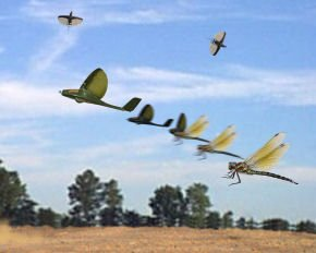 Dragonflymav2d3f3b4ch0